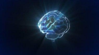 Rotate X-ray Brain of biology — Stock Video