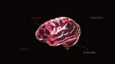 Red X-ray Brain of biology — Stock Video