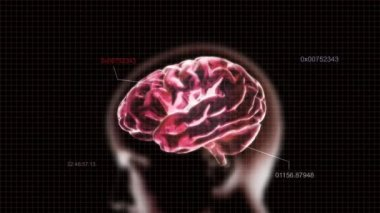 Decoding of red X-ray Brain of biology — Stock Video