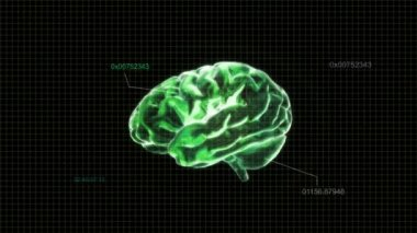 Green X-ray Brain of biology — Stock Video