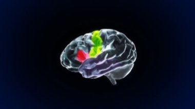 X-ray Brain parts of biology — Stock Video