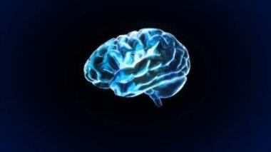 X-ray Brain of biology — Stock Video