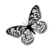 Butterfly, black — Stock Photo