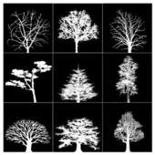 Trees. — Foto de Stock