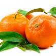 Three ripe tangerines with leaves — Stock Photo