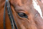 Caballos en el recinto con ojos curiosos — Foto de Stock