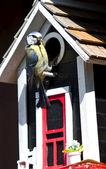 Blue tit at a birdhouse — Stock Photo