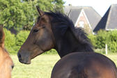 horse!! — Stock Photo