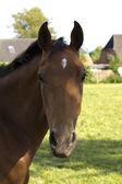 horse! — Stock Photo