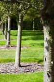Row of trees in an english country garden — Stock Photo