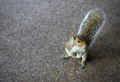 Cheeky squirrel posing on the concrete floor — Stock Photo