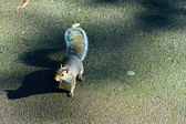 Cute squirrel on the trmac — Stock Photo