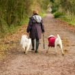 Middle aged woman walks her dogs in the countryside — Stock Photo