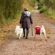 Royalty-Free Stock Photo: Middle aged woman walks her dogs in the countryside