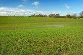 Zielone pole w angielskiej wsi z niewielkich powodzi — Zdjęcie stockowe