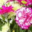 Bunch of various pink flowers cropped — Stock Photo