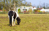 Horse standing in the paddock outside a county home — Stock Photo
