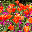 A variety of bright colourful spring flowers blloming in St Jame — Stock Photo