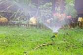 Sprinkler watering the lawn in an urban garden — Stock Photo