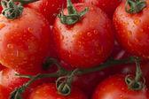 Fresh Ripe Tomatoes on the Vine 2 — Stock Photo