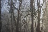 Korkunç orman arka plan — Stok fotoğraf