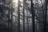 Spooky Forest Background 2 — Stock Photo