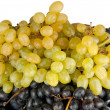 Different grapes isolated — Stock Photo