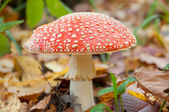 Mushroom in the forest — Stock Photo