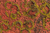 Paint on concrete and lichen on the side of a building — Stock Photo
