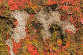 Peeling paint on concrete and lichen on the side of a building — Stock Photo