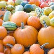 pumkins — Stock Photo