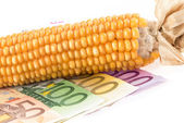 Euro banknotes with corn cob — Stock Photo