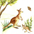 Watercolor illustration of a kangaroo — Stock Photo