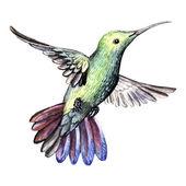 Akwarela ptak koliber — Zdjęcie stockowe