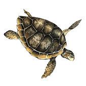 Watercolor sea turtle — Stock Photo