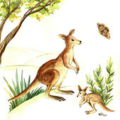 Watercolor illustration of a kangaroo — Stock Photo