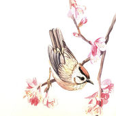 Watercolor spring bird — Stock Photo
