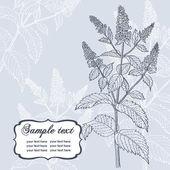 Cartão romântico com hortelã — Vetorial Stock