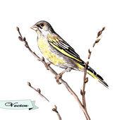 Vector watercolor songbird — Stock Vector