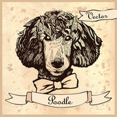 Vintage poodle dog head in vector — Vector de stock