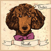 Vintage poodle dog head in vector — Stock Vector