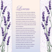 Beautiful background with lavender — Stock Vector