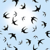 Pattern with swallows — Stock Photo