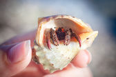 Hermit crab crawling on the beach gravels — Stock Photo
