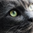 Photo of cat yellow-gray eyes — Stock Photo