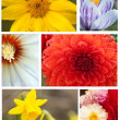 Collage from beautiful flowers — Stock Photo