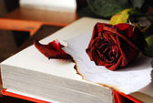 Image of roses on book — Stockfoto