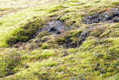 Iceland - Through wild highlands — Stock Photo