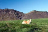 Iceland - The Northwest - Peninsula Sneifellsnes — Stock Photo