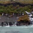 Iceland - The West - Hraunfossar — Stock Photo #16227431